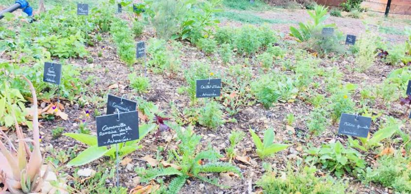 Garden of fragrant, aromatic and medicinal plants