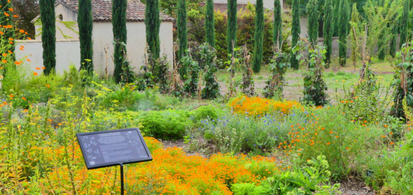 The garden of aromatic plants and edible flowers